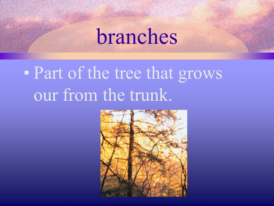 branches Part of the tree that grows our from the trunk.