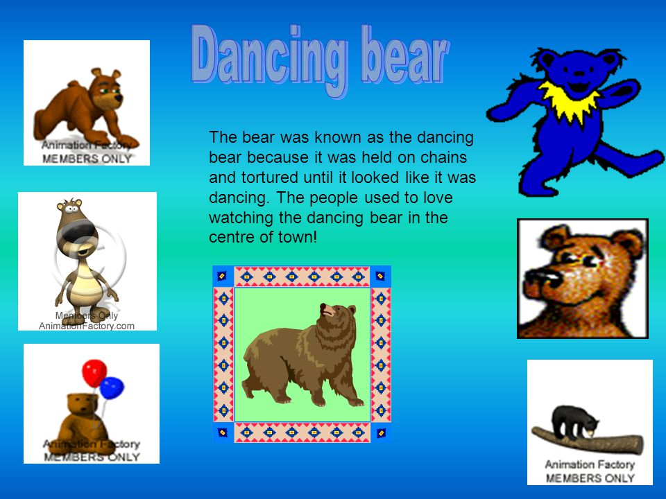 The bear was known as the dancing bear because it was held on chains and tortured until it looked like it was dancing.