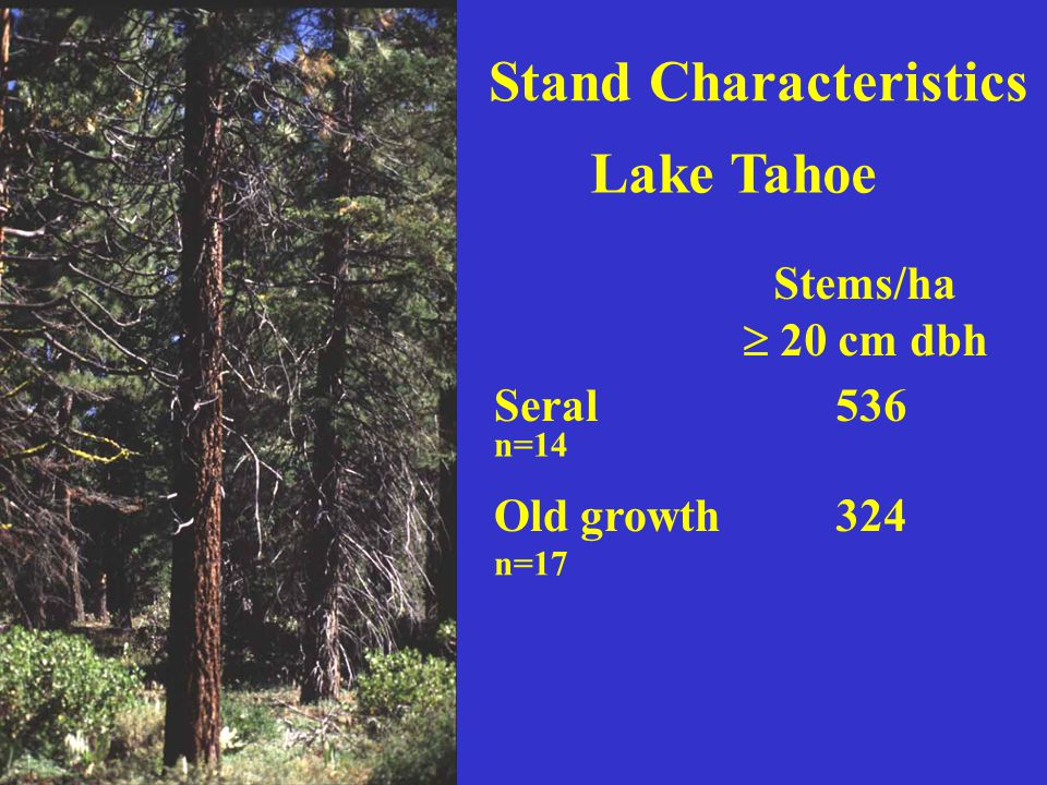 Stand Characteristics Lake Tahoe Seral Old growth Stems/ha  20 cm dbh 536 324 n=14 n=17
