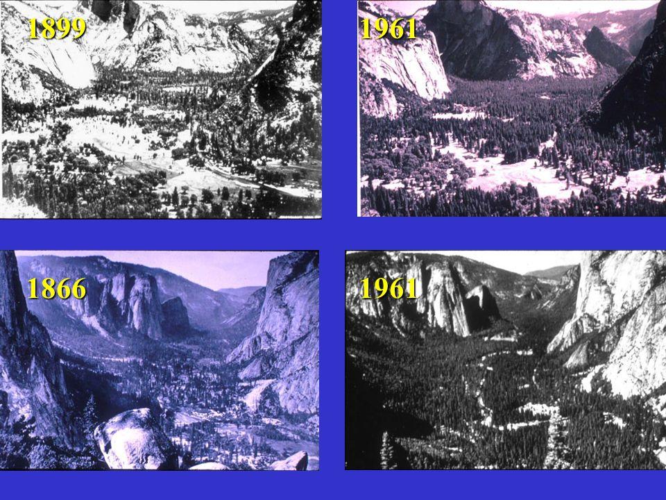 Disturbance in Yosemite Valley