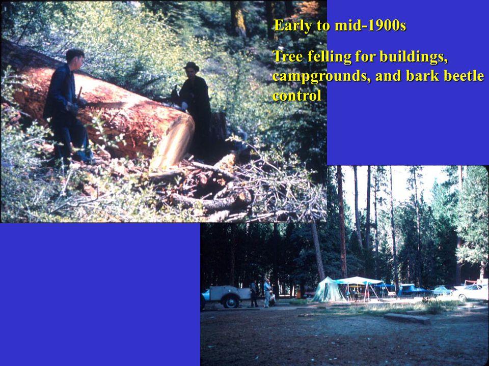 Bark Beetles and Conifer Hosts