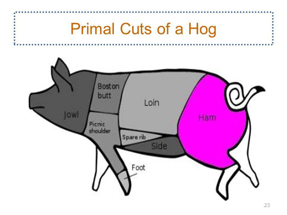 Primal Cuts of a Hog 23