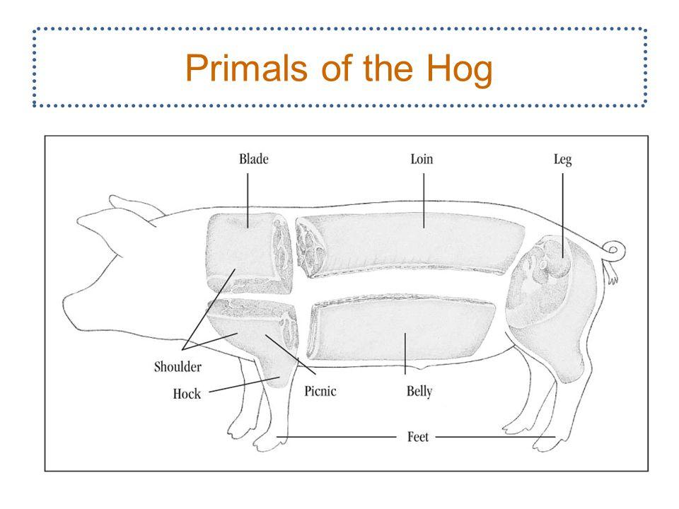 Primals of the Hog 6