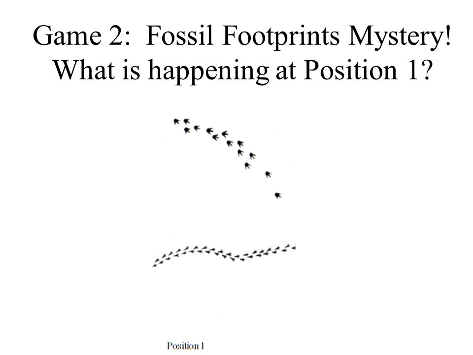 Game 2: Fossil Footprints Mystery! What is happening at Position 1?