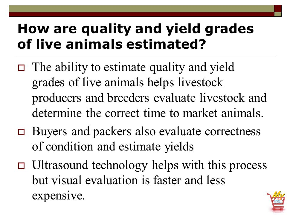 How are quality and yield grades of live animals estimated?  The ability to estimate quality and yield grades of live animals helps livestock produce