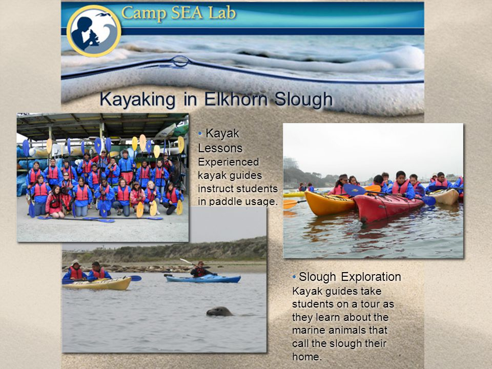 Kayaking in Elkhorn Slough Kayak Lessons Experienced kayak guides instruct students in paddle usage.