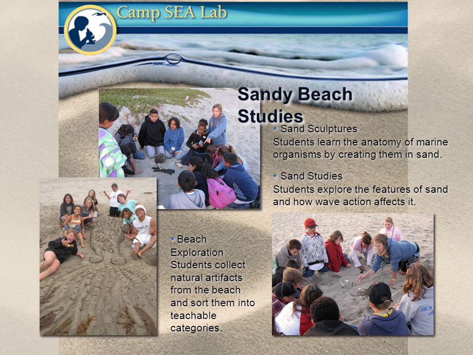 Beach Exploration Students collect natural artifacts from the beach and sort them into teachable categories.