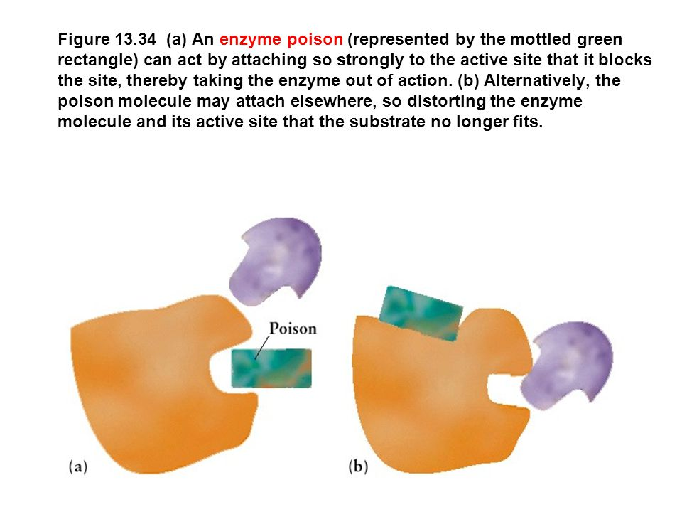 Figure 13.34 (a) An enzyme poison (represented by the mottled green rectangle) can act by attaching so strongly to the active site that it blocks the