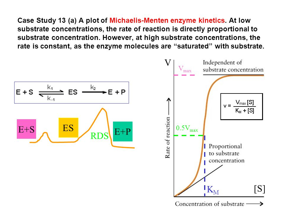 Case Study 13 (a) A plot of Michaelis-Menten enzyme kinetics. At low substrate concentrations, the rate of reaction is directly proportional to substr
