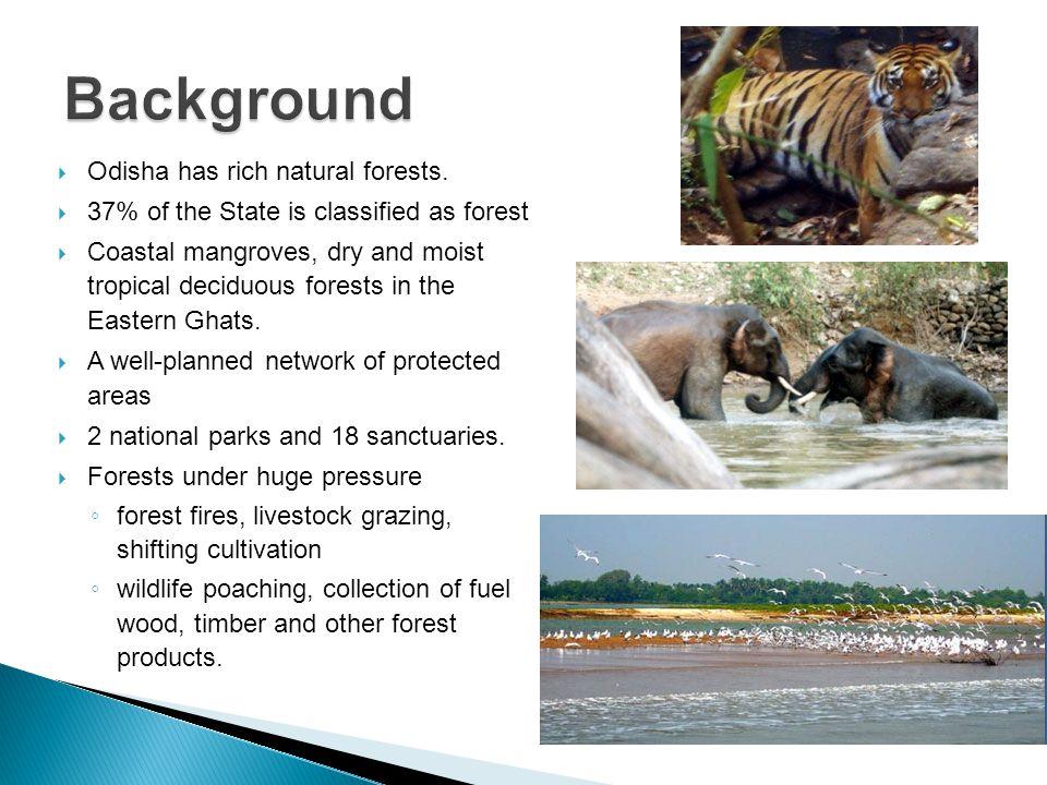  Odisha has rich natural forests.