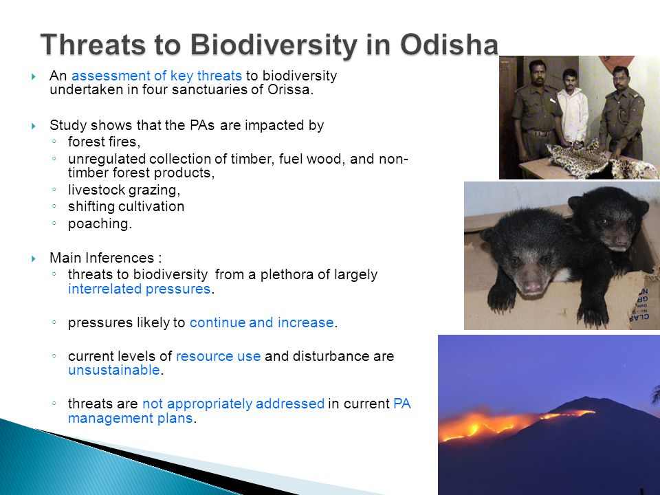  An assessment of key threats to biodiversity undertaken in four sanctuaries of Orissa.
