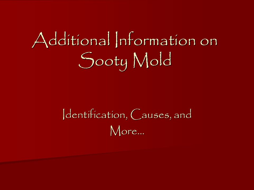 Additional Information on Sooty Mold Identification, Causes, and More…