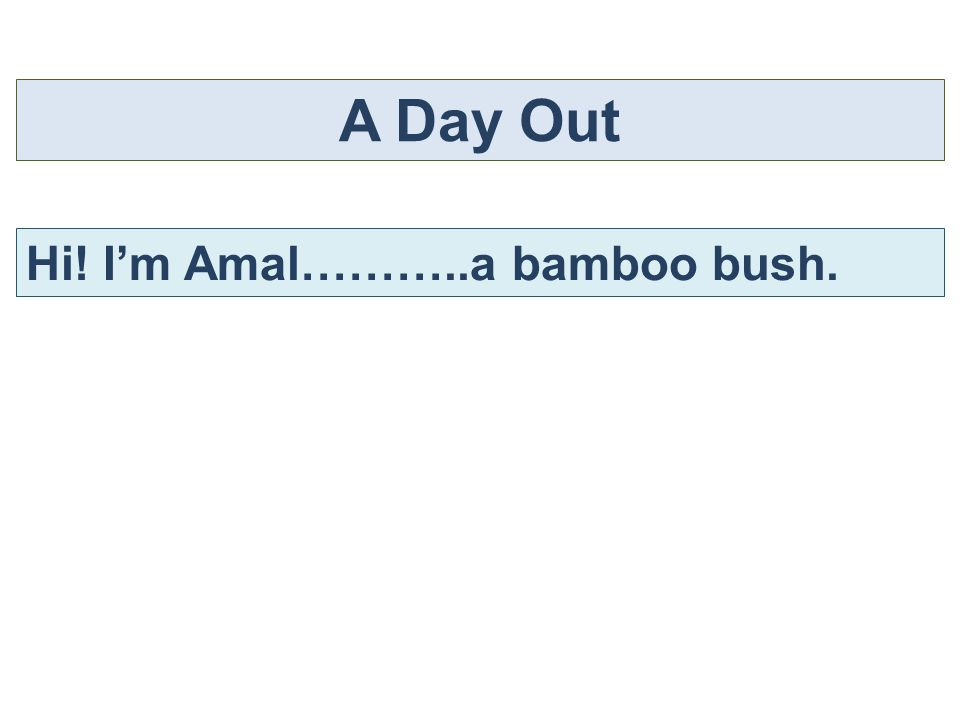 A Day Out Hi! I'm Amal………..a bamboo bush.
