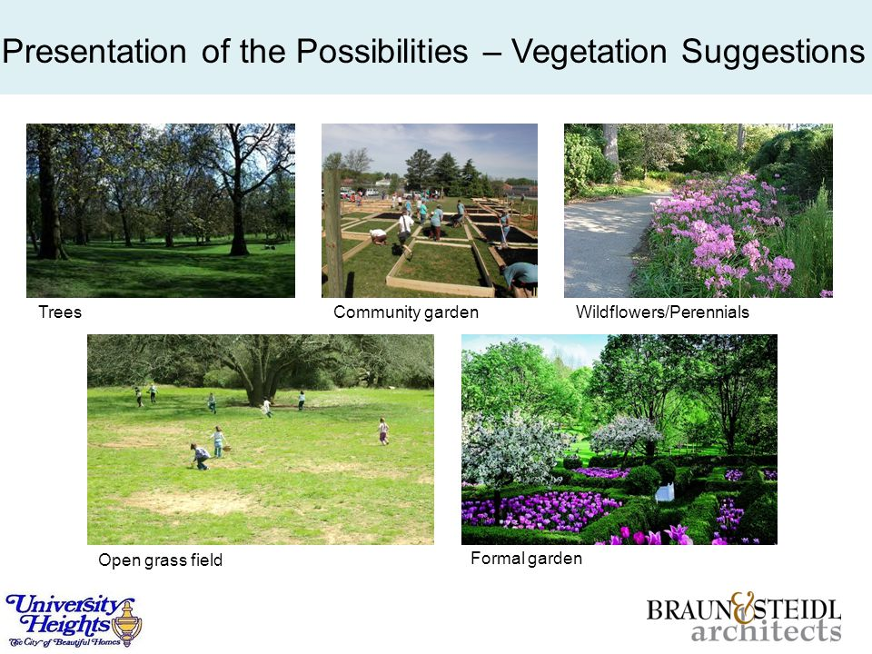 TreesCommunity gardenWildflowers/Perennials Open grass field Formal garden Presentation of the Possibilities – Vegetation Suggestions