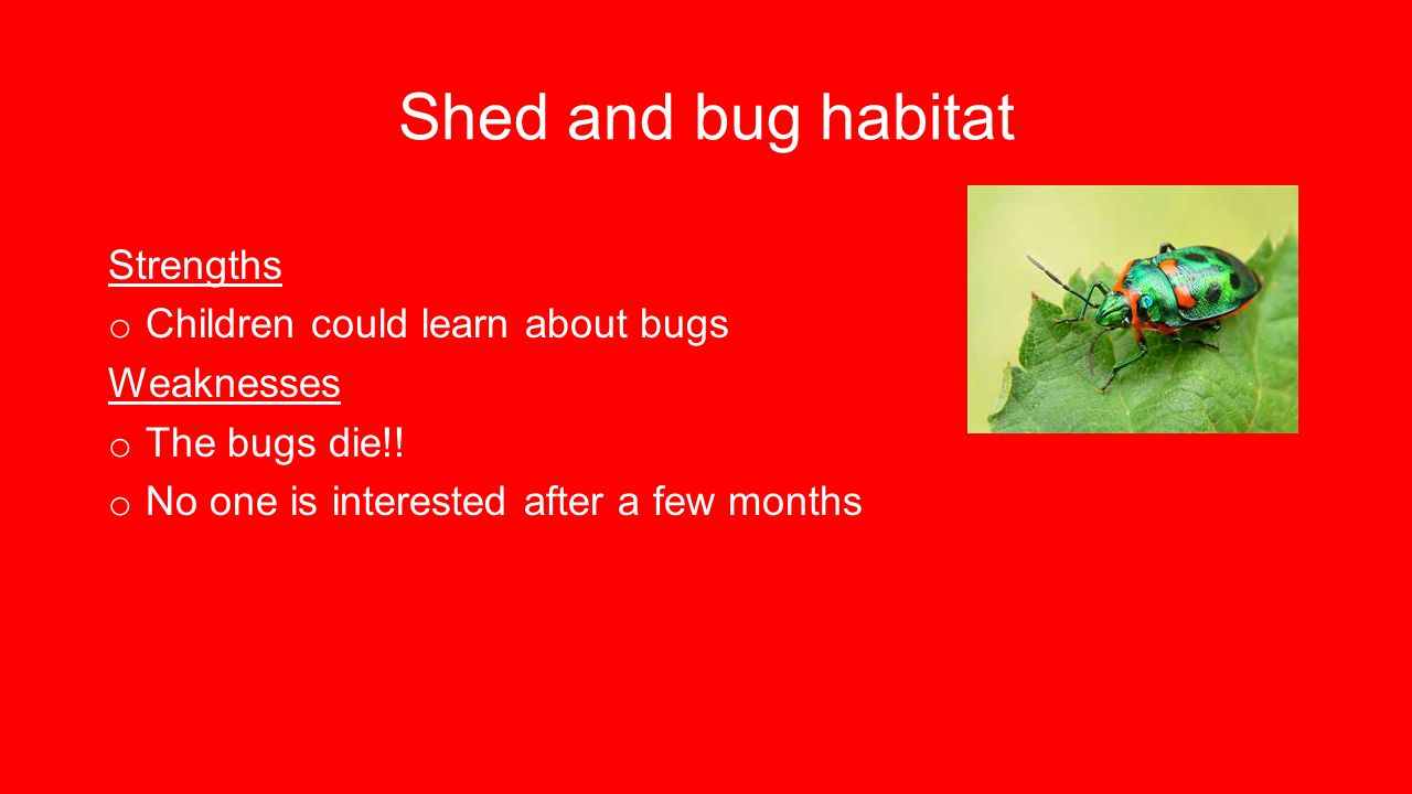 Shed and bug habitat Strengths o Children could learn about bugs Weaknesses o The bugs die!.