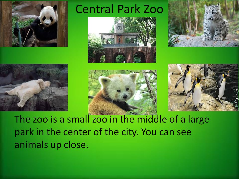 Central Park Zoo The zoo is a small zoo in the middle of a large park in the center of the city.