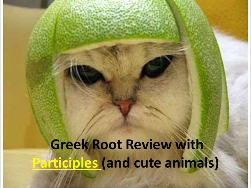 Greek Root Review with Participles (and cute animals)