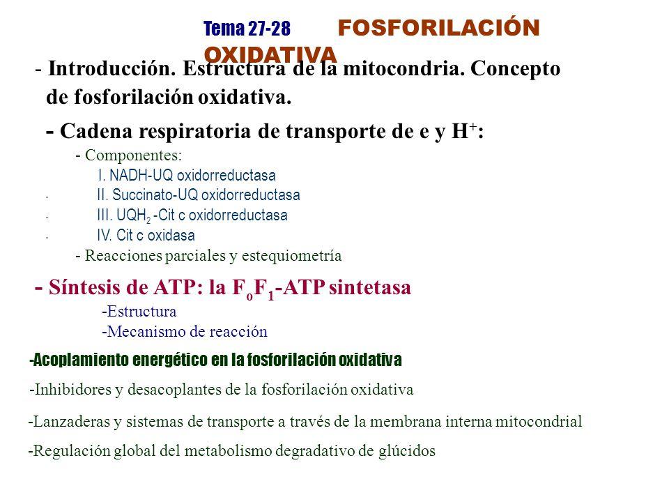 Tema 27-28 FOSFORILACIÓN OXIDATIVA - Introducción. Estructura de la mitocondria. Concepto de fosforilación oxidativa. - Cadena respiratoria de transpo