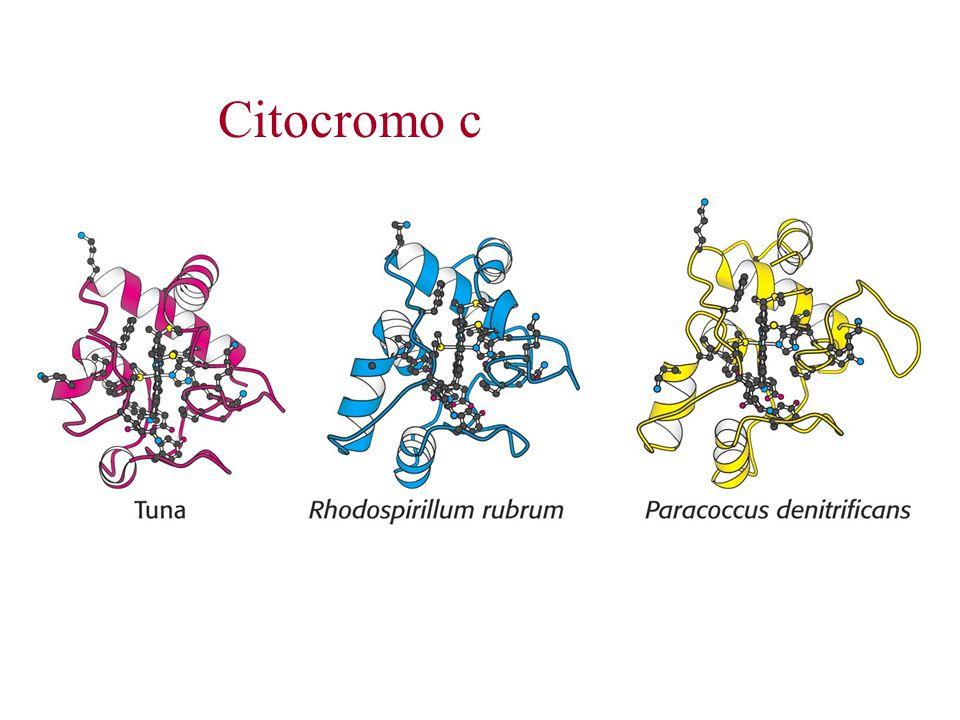Citocromo c