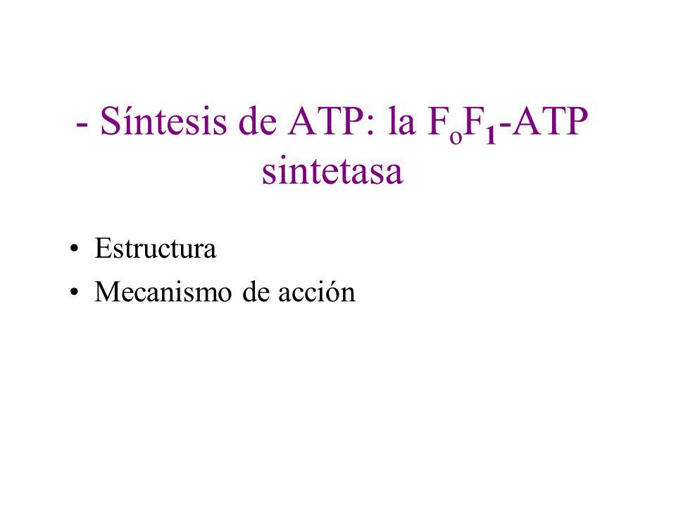 - Síntesis de ATP: la F o F 1 -ATP sintetasa Estructura Mecanismo de acción