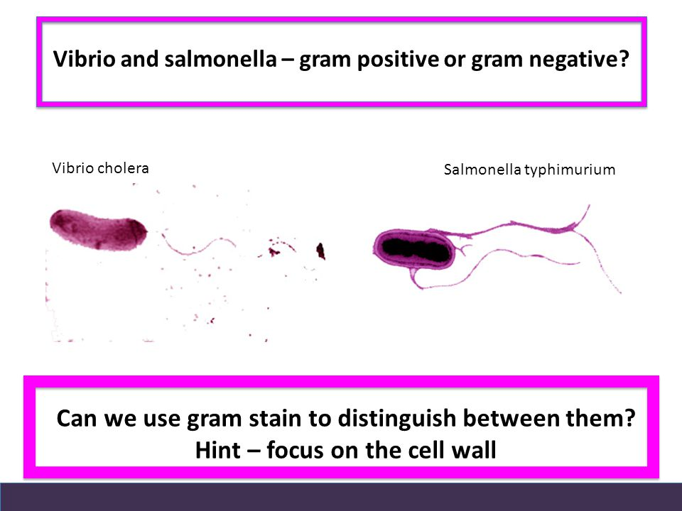 Can we use gram stain to distinguish between them.