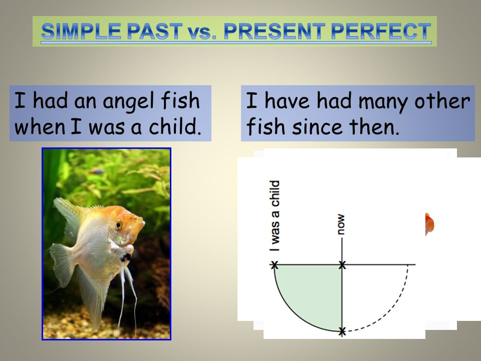 I had an angel fish when I was a child. I have had many other fish since then.