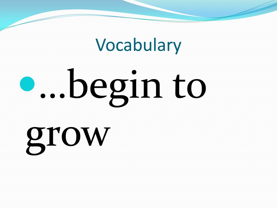 Vocabulary …begin to grow