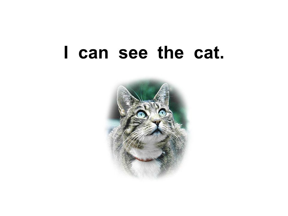 I can see the cat.