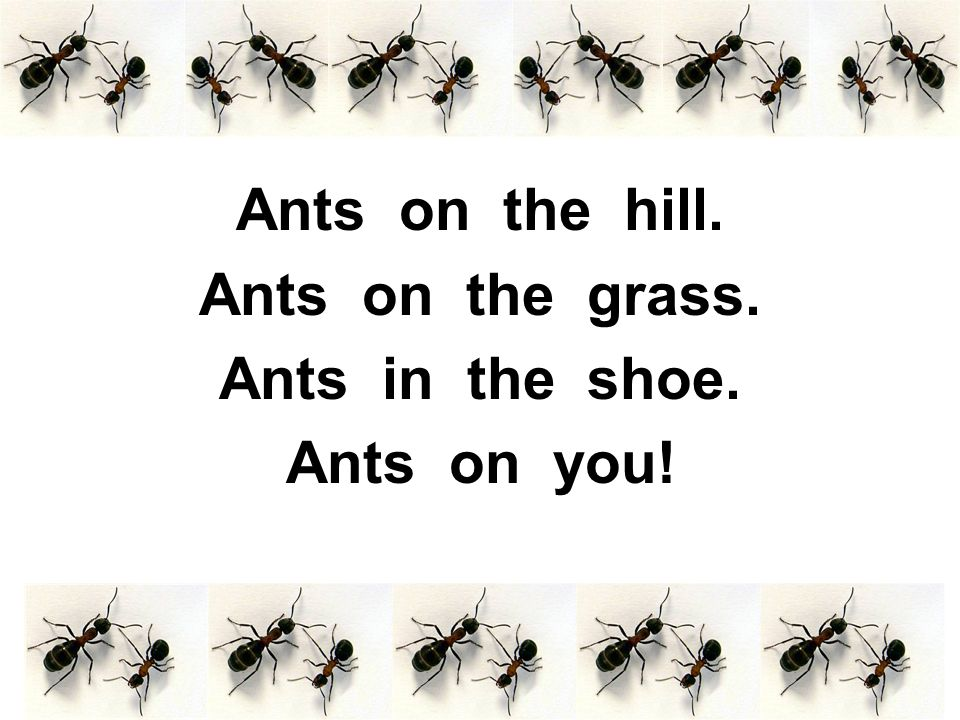Ants on the hill. Ants on the grass. Ants in the shoe. Ants on you!