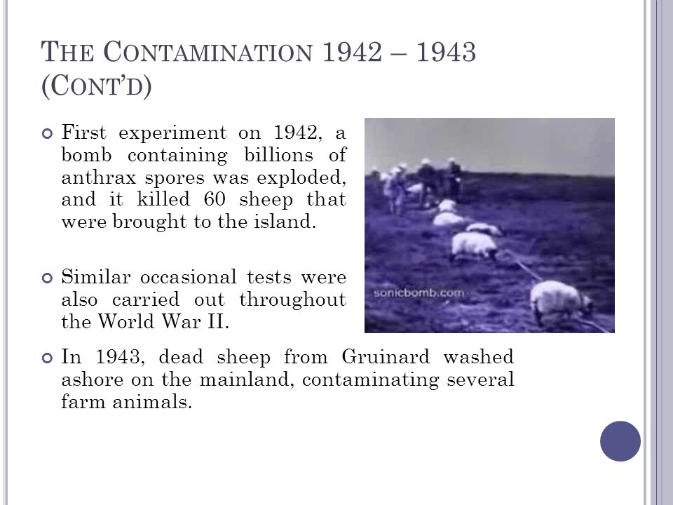 T HE C ONTAMINATION 1942 – 1943 (C ONT ' D ) First experiment on 1942, a bomb containing billions of anthrax spores was exploded, and it killed 60 she
