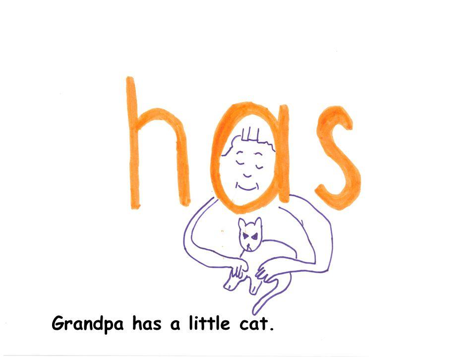 Grandpa has a little cat.