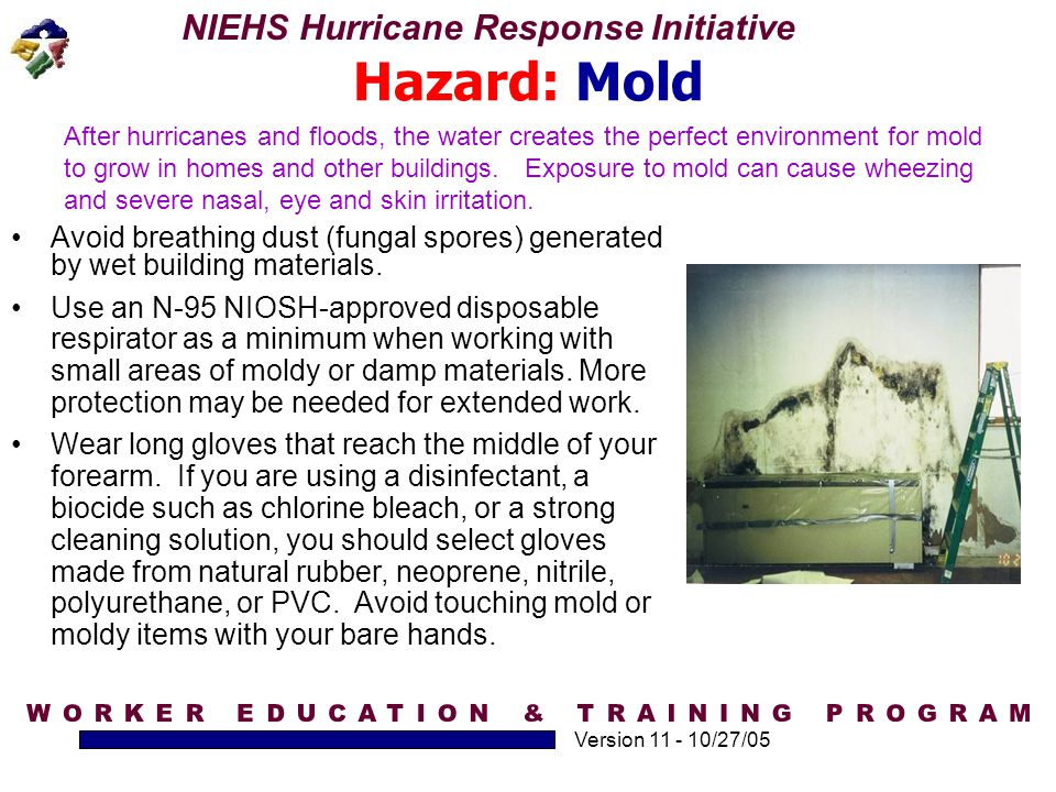 NIEHS Hurricane Response Initiative Version 11 - 10/27/05 Hazard: Mold After hurricanes and floods, the water creates the perfect environment for mold