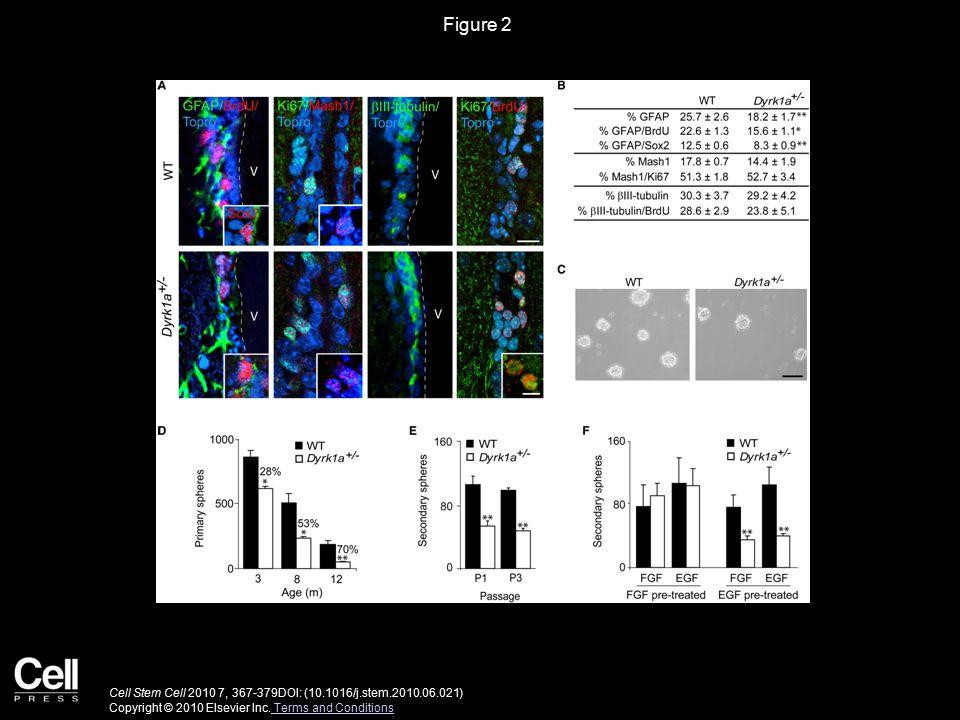 Figure 3 Cell Stem Cell 2010 7, 367-379DOI: (10.1016/j.stem.2010.06.021) Copyright © 2010 Elsevier Inc.