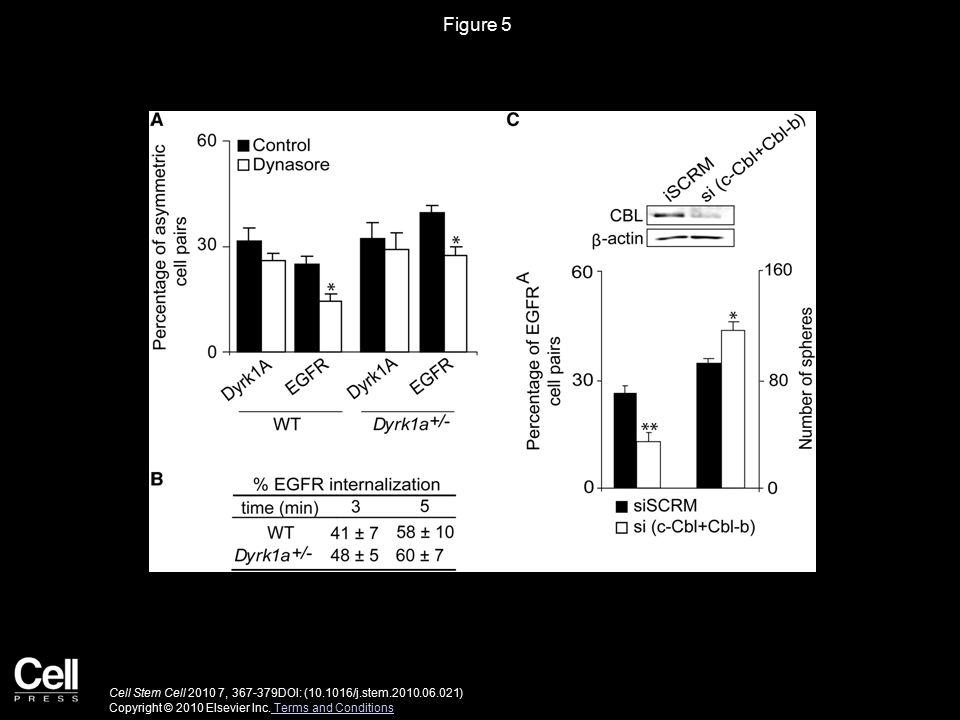 Figure 5 Cell Stem Cell 2010 7, 367-379DOI: (10.1016/j.stem.2010.06.021) Copyright © 2010 Elsevier Inc.