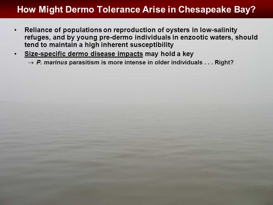 How Might Dermo Tolerance Arise in Chesapeake Bay.
