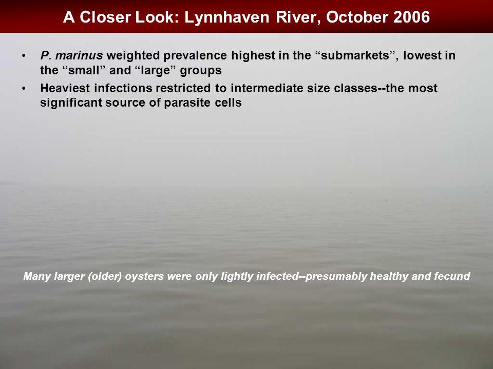 A Closer Look: Lynnhaven River, October 2006 P.