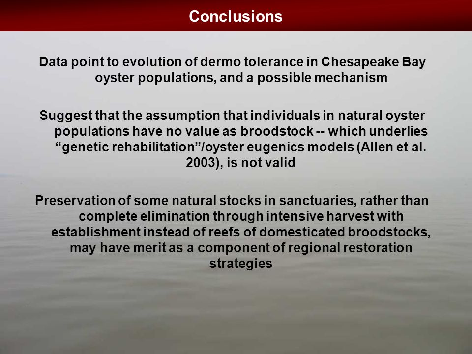 Conclusions Data point to evolution of dermo tolerance in Chesapeake Bay oyster populations, and a possible mechanism Suggest that the assumption that individuals in natural oyster populations have no value as broodstock -- which underlies genetic rehabilitation /oyster eugenics models (Allen et al.