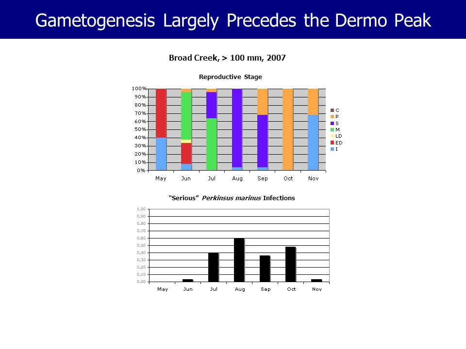 "Gametogenesis Largely Precedes the Dermo Peak Reproductive Stage ""Serious"" Perkinsus marinus Infections Broad Creek, > 100 mm, 2007"