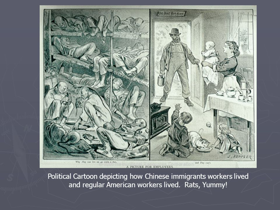 Political Cartoon depicting how Chinese immigrants workers lived and regular American workers lived. Rats, Yummy!