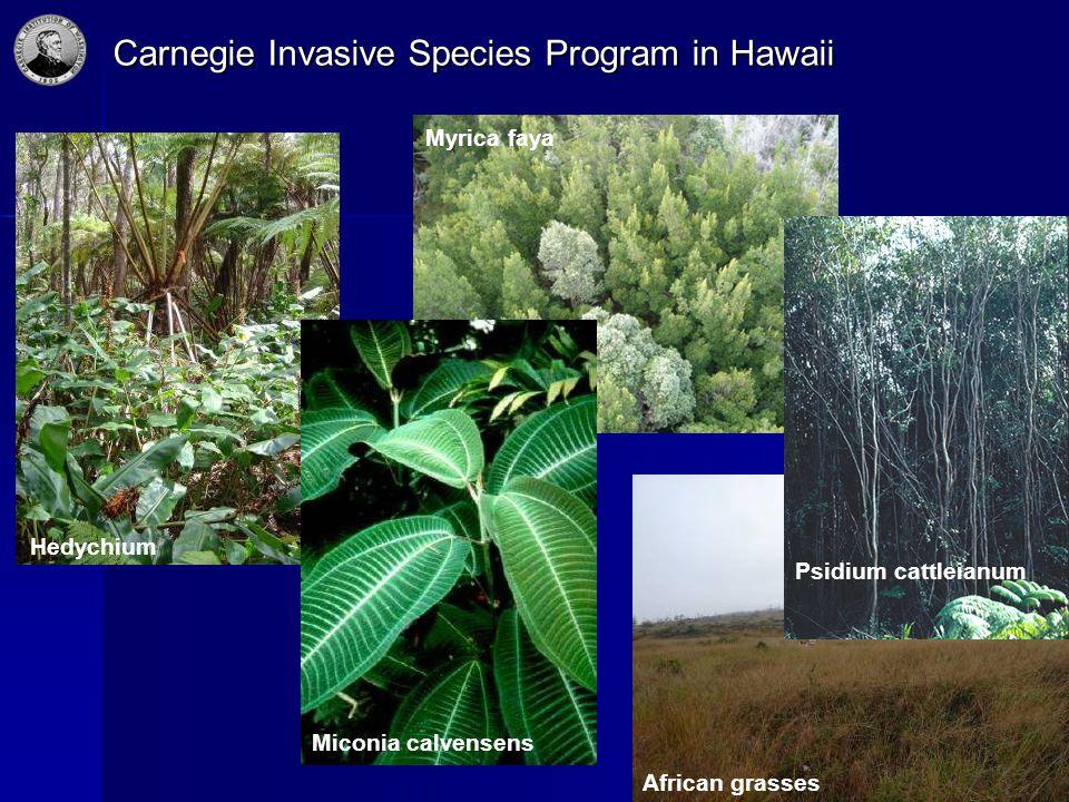 Carnegie Invasive Species Program in Hawaii Hedychium Miconia calvensens African grasses Myrica faya Psidium cattleianum