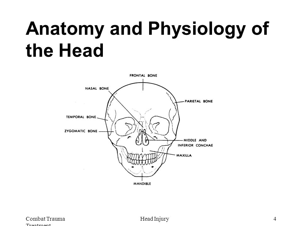 Combat Trauma Treatment 4Head Injury Anatomy and Physiology of the Head