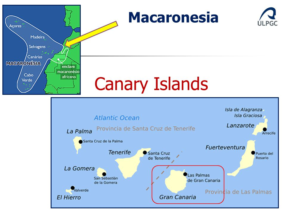 Macaronesia Canary Islands