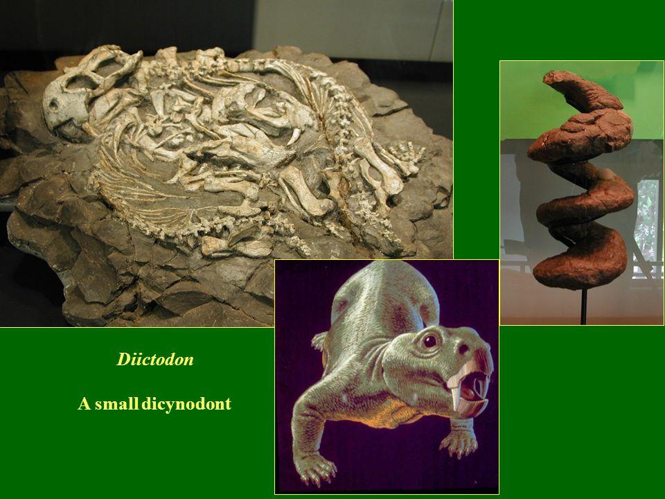 Diictodon A small dicynodont