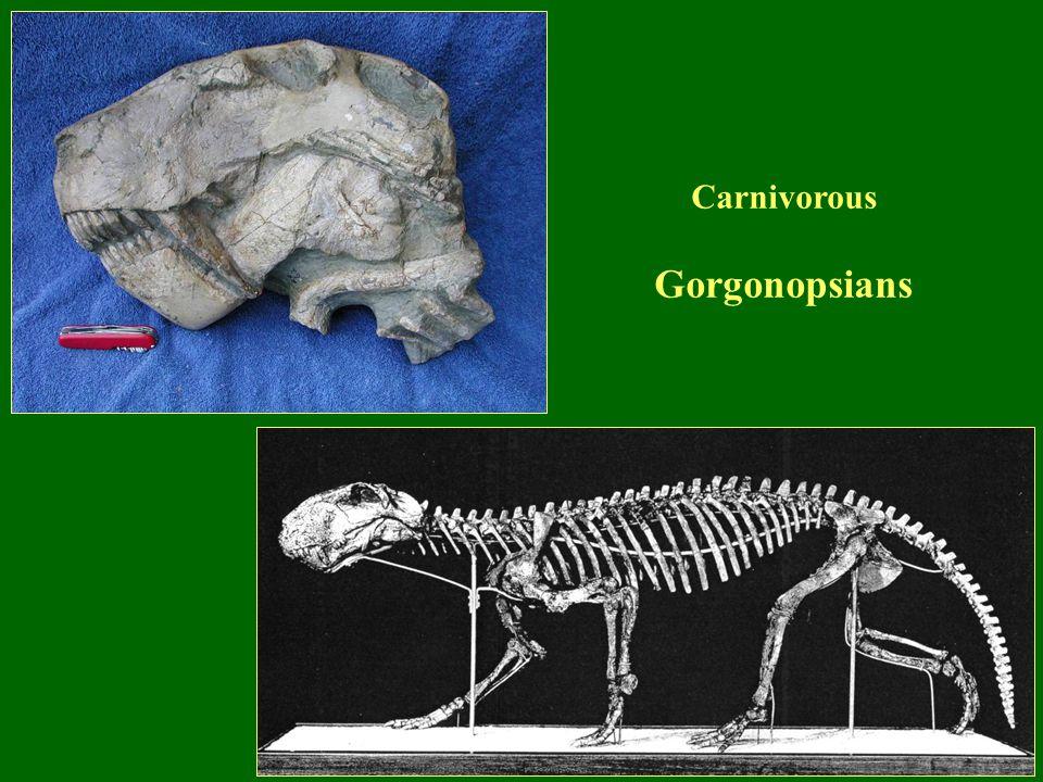 Carnivorous Gorgonopsians