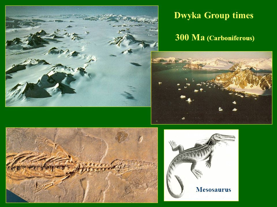 Mesosaurus Dwyka Group times 300 Ma (Carboniferous)