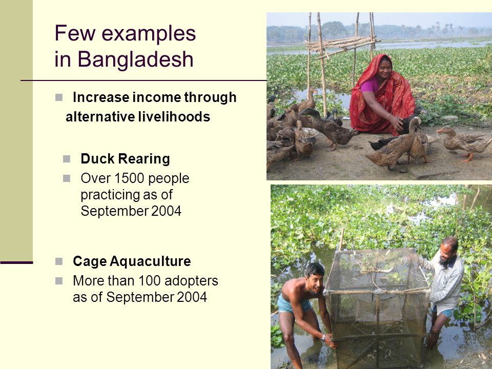 14 Few examples in Bangladesh Increase income through alternative livelihoods Duck Rearing Over 1500 people practicing as of September 2004 Cage Aquaculture More than 100 adopters as of September 2004