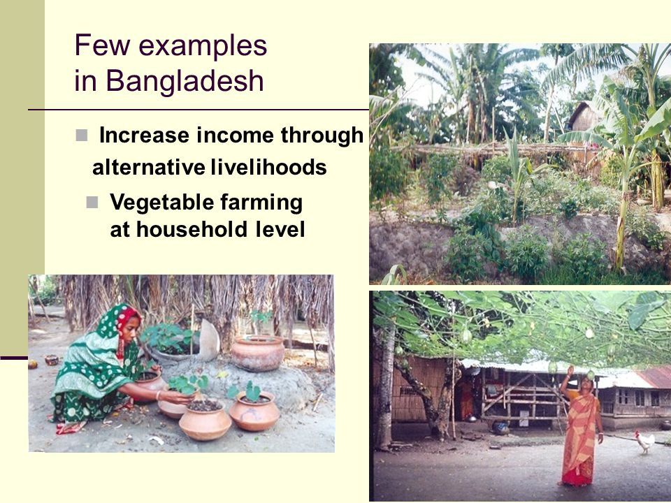 16 Few examples in Bangladesh Increase income through alternative livelihoods Vegetable farming at household level