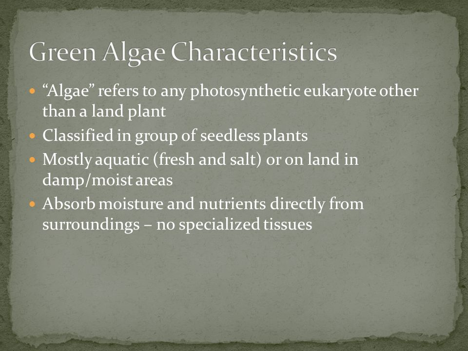Algae refers to any photosynthetic eukaryote other than a land plant Classified in group of seedless plants Mostly aquatic (fresh and salt) or on land in damp/moist areas Absorb moisture and nutrients directly from surroundings – no specialized tissues