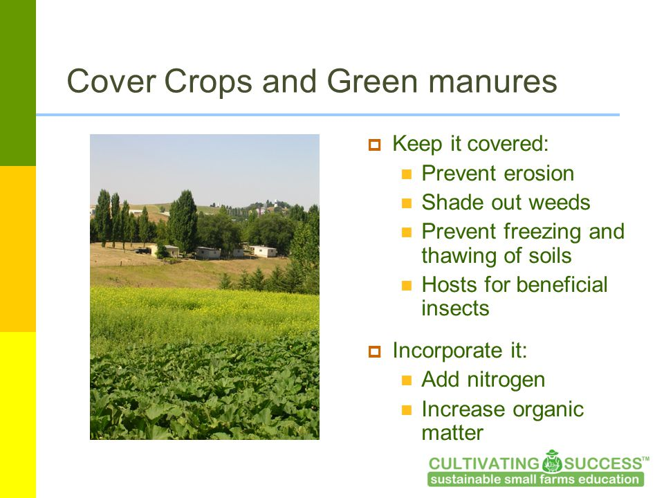 Cover Crops and Green manures  Keep it covered: Prevent erosion Shade out weeds Prevent freezing and thawing of soils Hosts for beneficial insects  Incorporate it: Add nitrogen Increase organic matter
