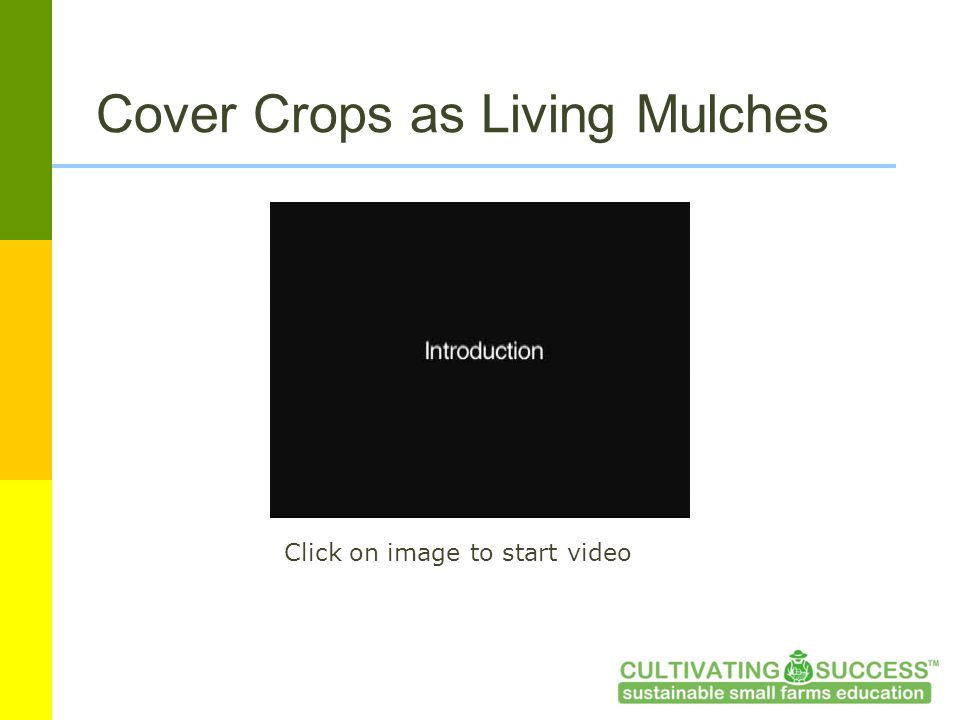 Cover Crops as Living Mulches Click on image to start video